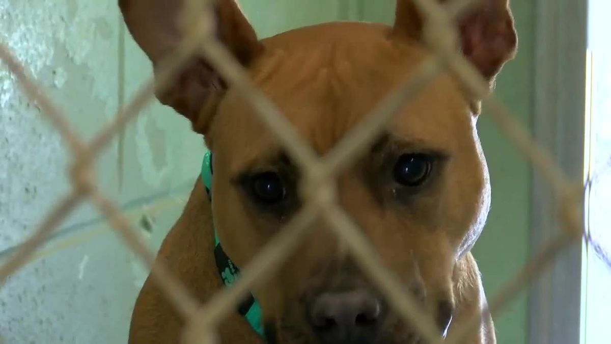 North Myrtle Beach leaders work to strengthen laws to protect animals