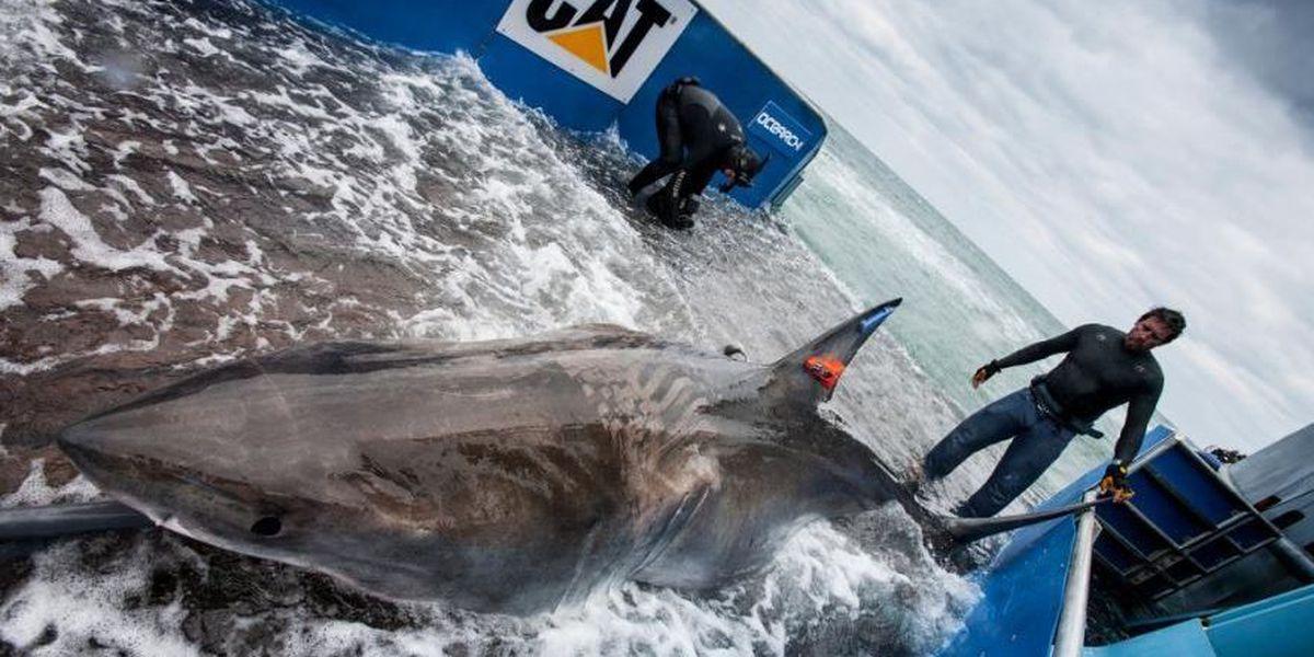 Mary Lee has company; another shark pings off Carolina coast
