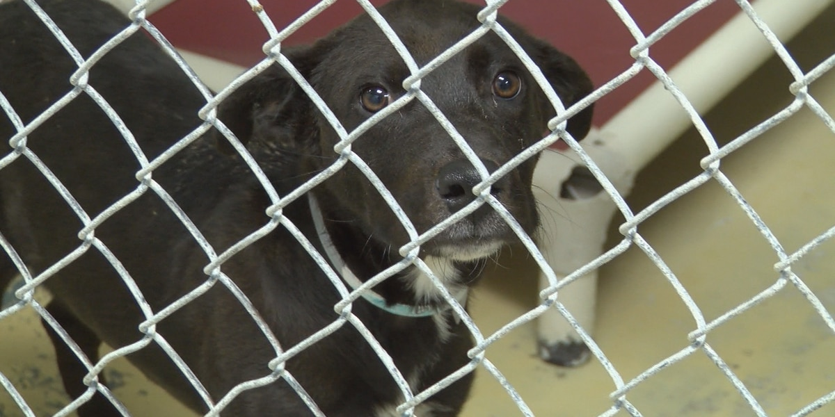 Horry County Council approves funding to help waive pet adoption fees