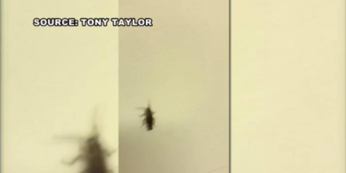 High school basketball team files complaint against bug-infested hotel