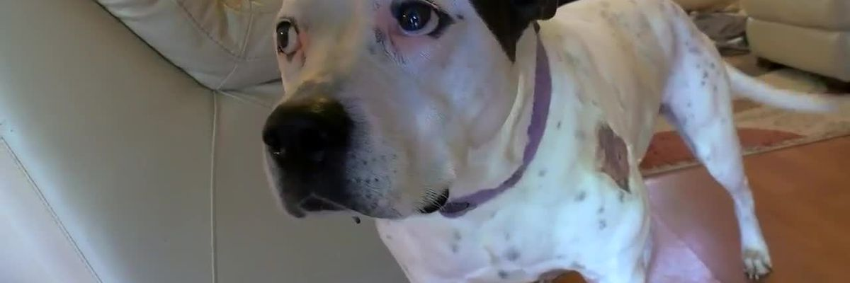 GRAPHIC: Dog survives alligator attack in Horry County family's backyard