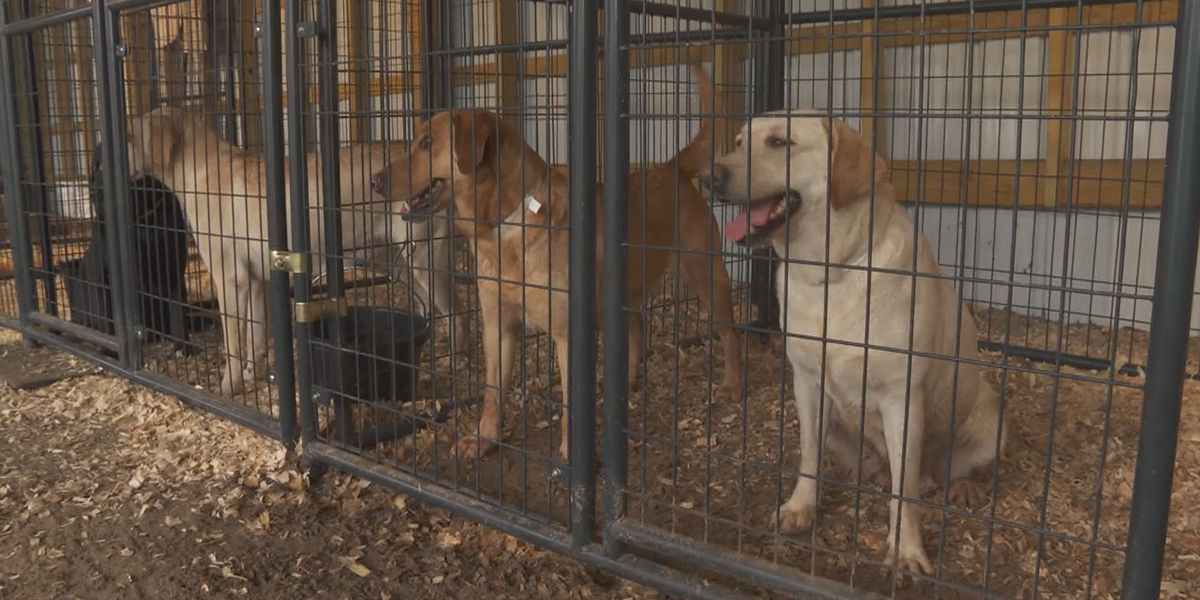 49 horses, 47 dogs seized from home in Kershaw County; rescue groups ask for donations