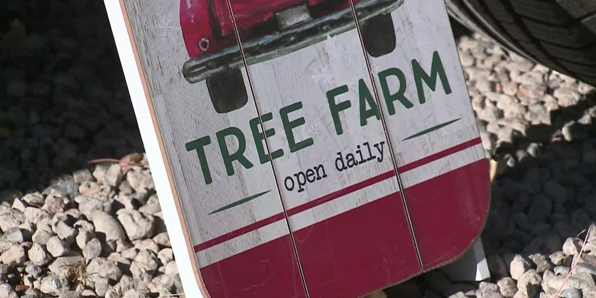 New Mexico Christmas tree lot offers 'pay what you can' trees