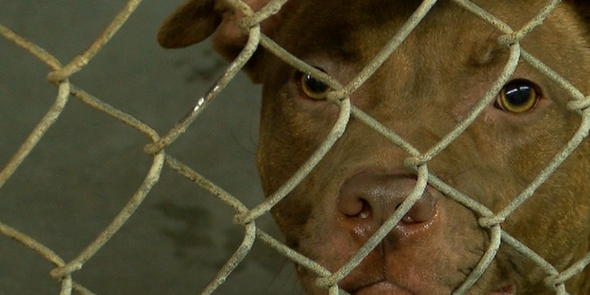 Grand Strand Humane Society dealing with 'unusual' overcrowding during holiday season