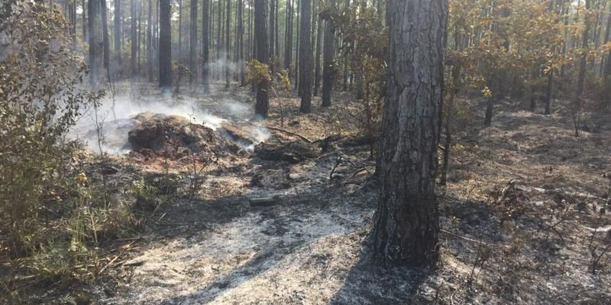 Forestry Commission defends importance of controlled burns in South Carolina