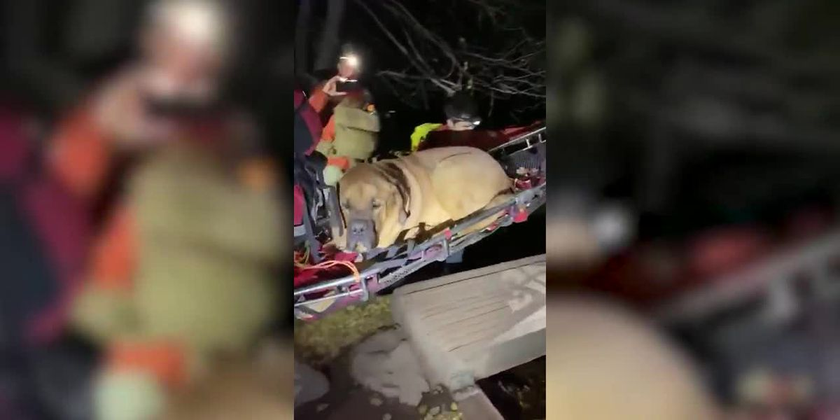 RAW: Rescue team carries 190-pound, exhausted mastiff off Utah hiking trail