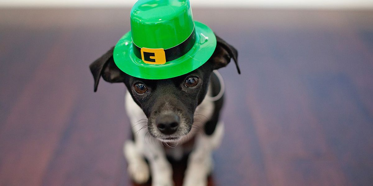 Grand Strand getting into St. Patrick's Day spirit with weekend full of events