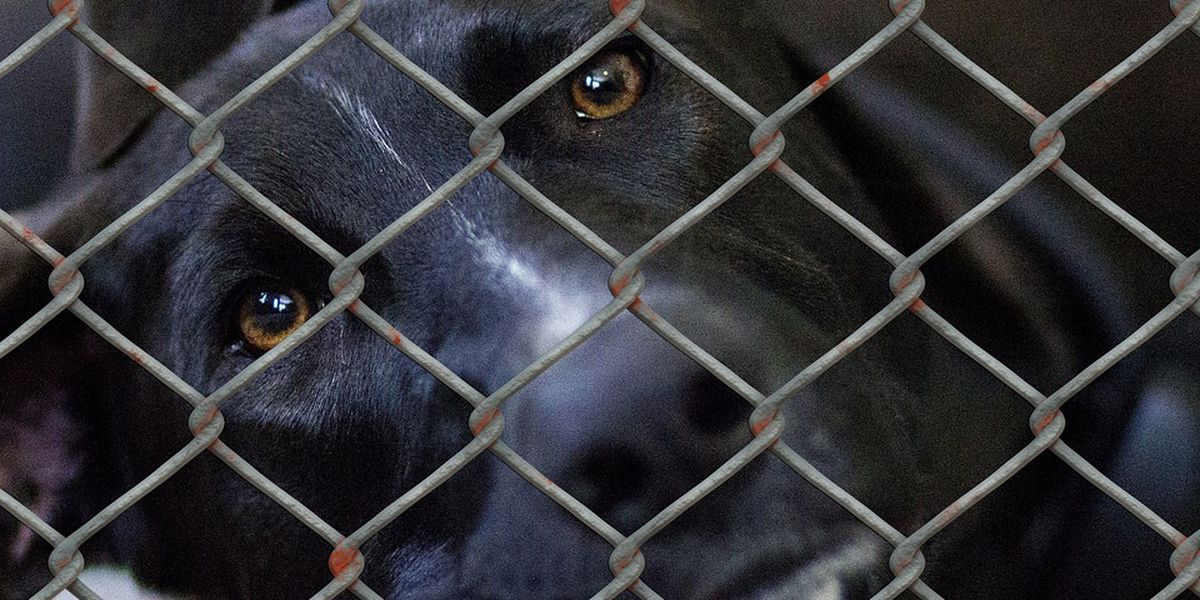 Horry County councilman allocates $25K to help waive pet adoption fees
