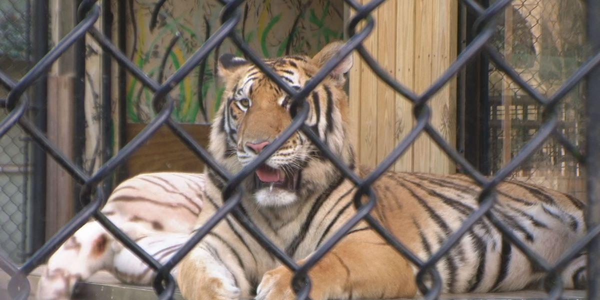 TONIGHT AT 11 - Myrtle Beach animal exhibit under federal investigation