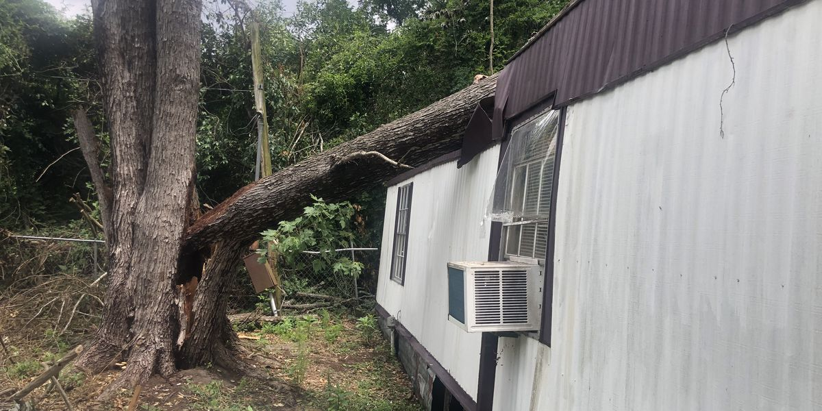 Camden family in need of help after tree pierces through mobile home