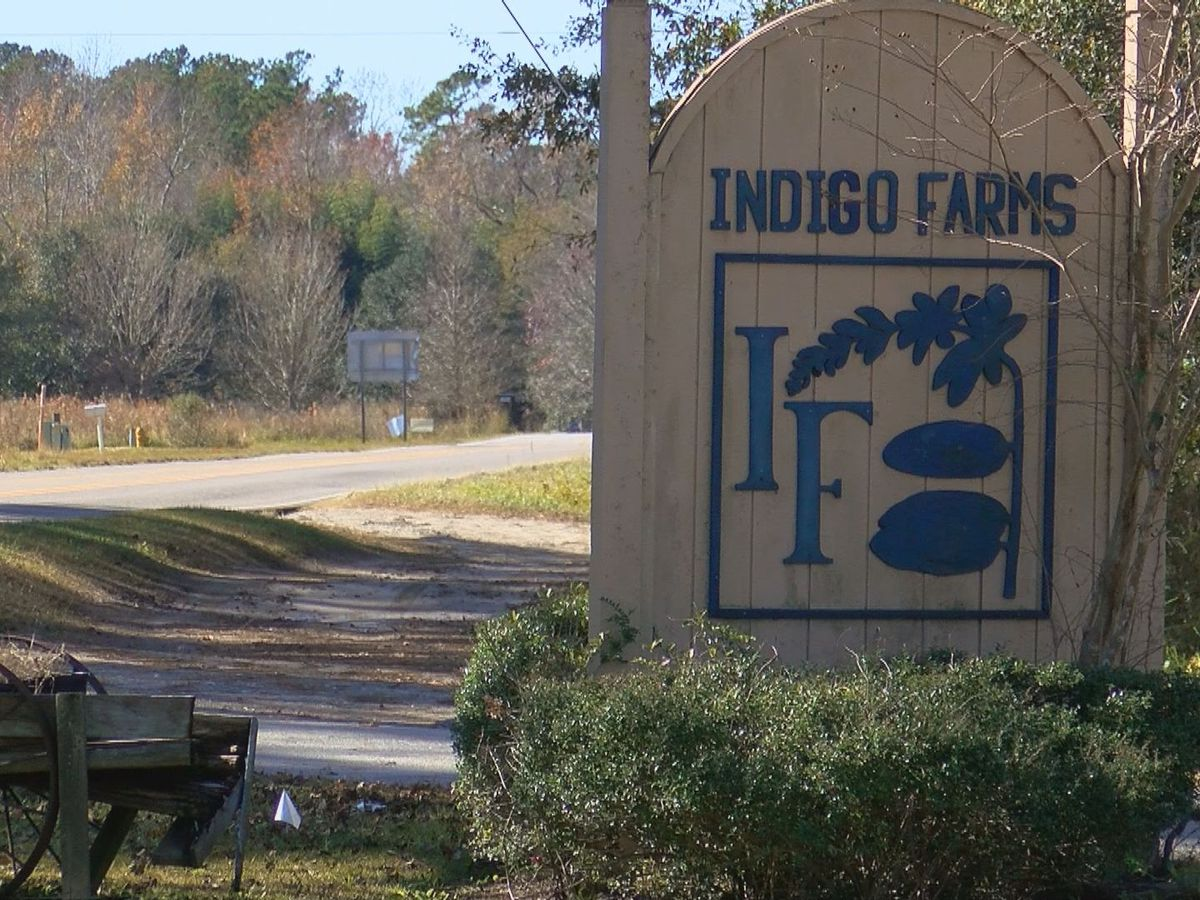 Indigo Farms owners worried Carolina Bays extension project could eliminate farm