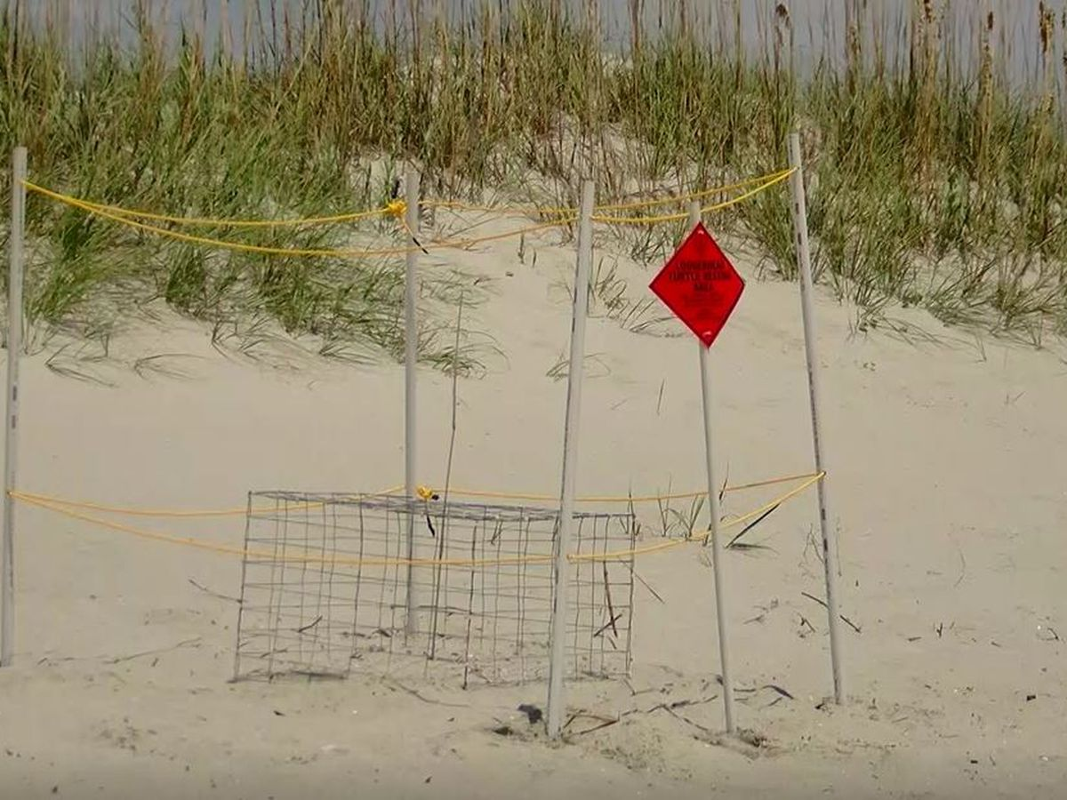 Sea turtle cages stolen and destroyed in North Myrtle Beach