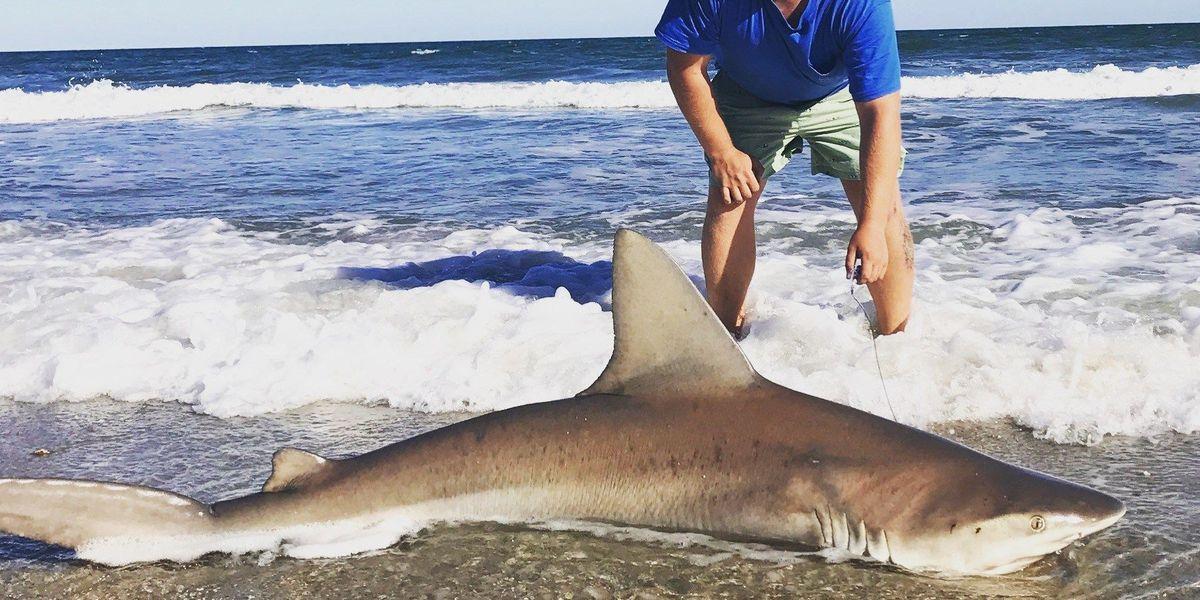 Catches 8 Foot Shark In Myrtle Beach