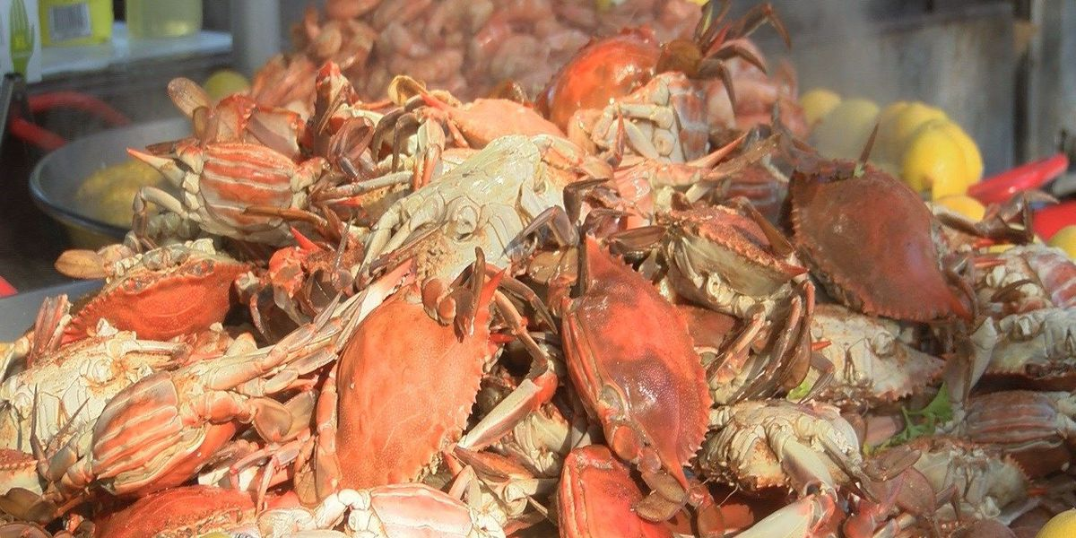 35th Annual Blue Crab festival returns to the Grand Strand