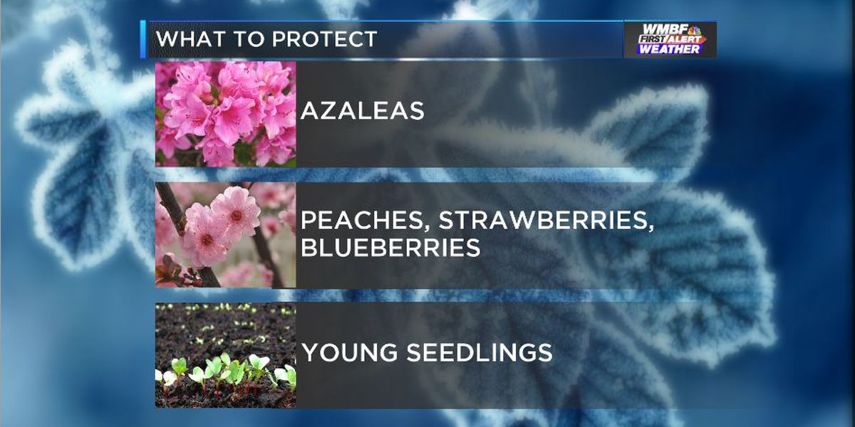 FIRST ALERT: What and how to protect from freezing temperatures