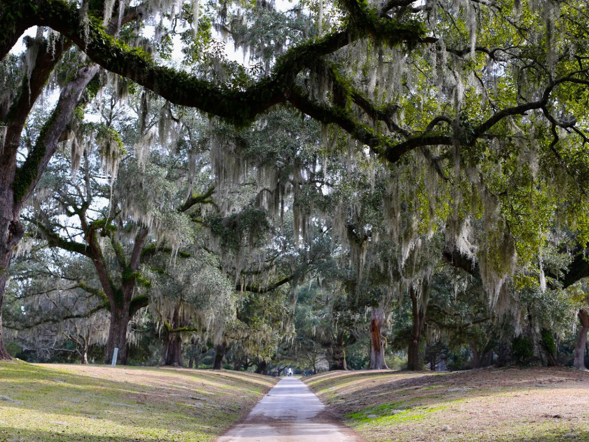 Tidelands Health partners with Brookgreen Gardens to offer 'walking prescriptions'