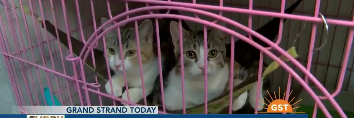 Furry Friends Friday with Sav-R-Cats adoption center