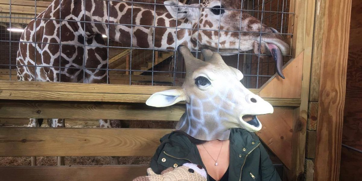 'Giraffe Mom' meets momma giraffe April in New York