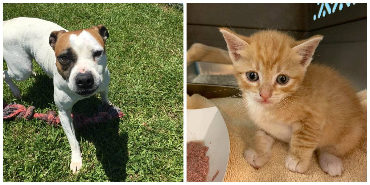 'That's a beautiful thing:' Grand Strand Humane Society celebrates record-setting adoption event