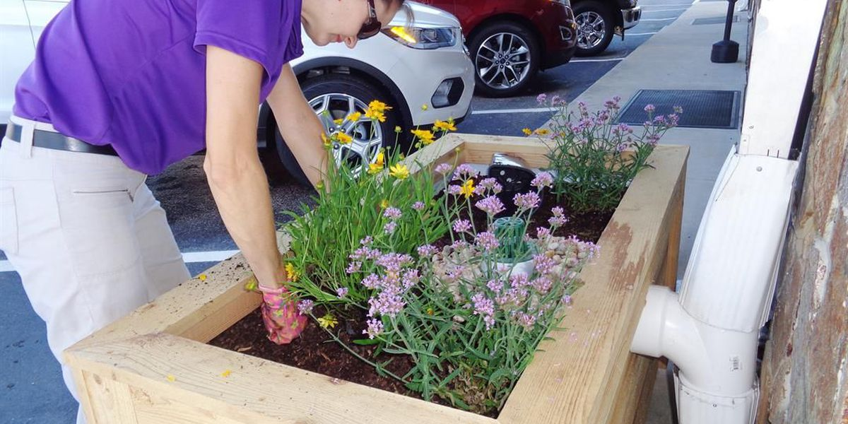 Grant program provides two stormwater planter boxes at Pee Dee auto dealers