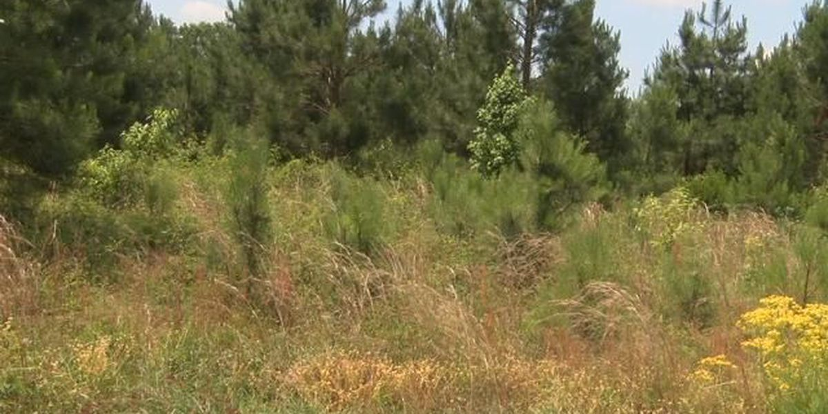 Florence approves development of west-end subdivision