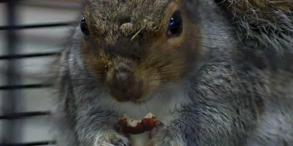 S.C. squirrel predicts winner of presidential race