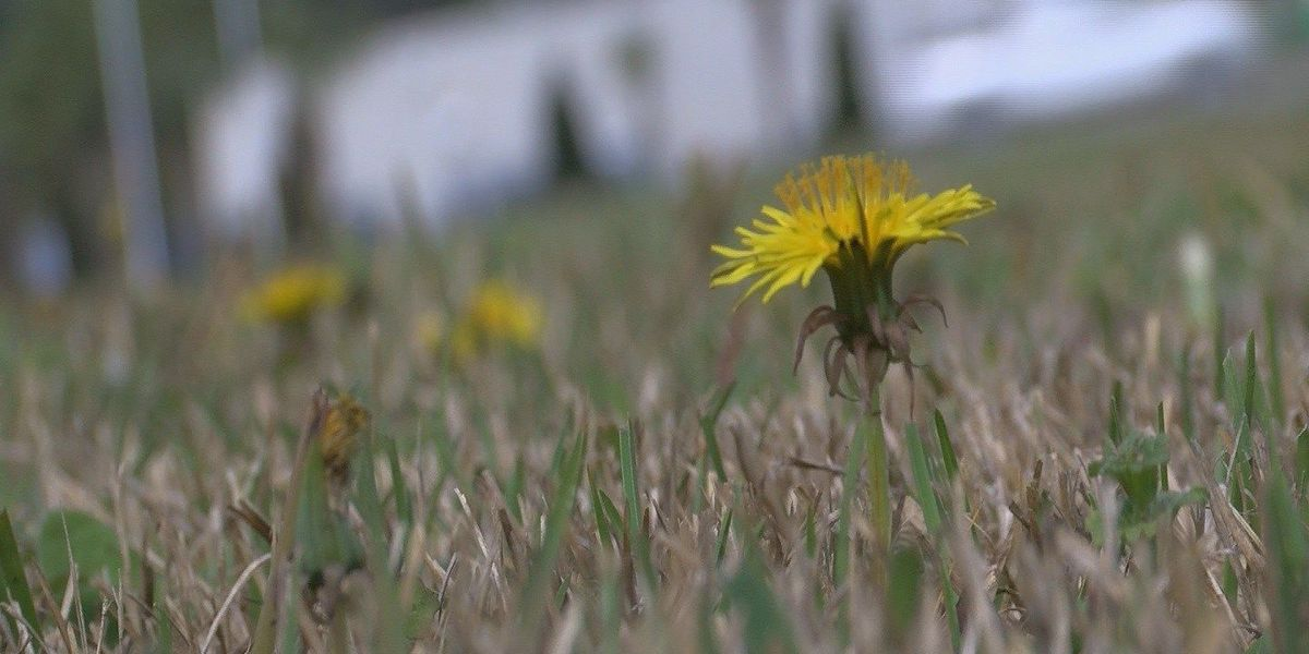 Warm weather brings increased allergy activity