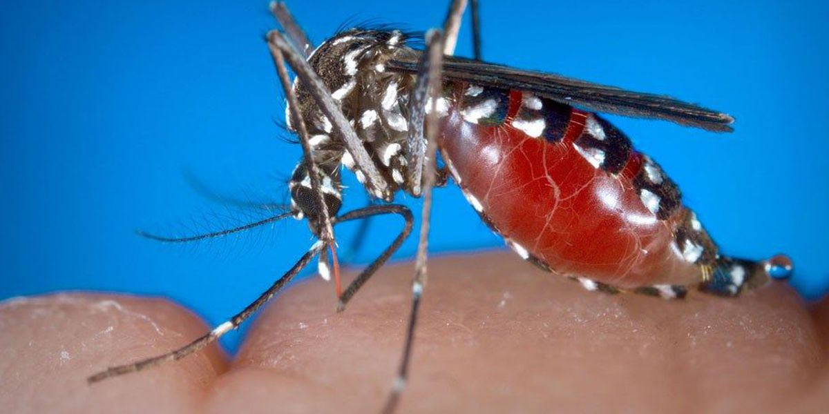 DHEC confirms one case of West Nile Virus in Horry County