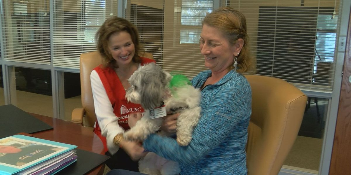 'She makes you happy': Therapy dogs helping patients at MUSC
