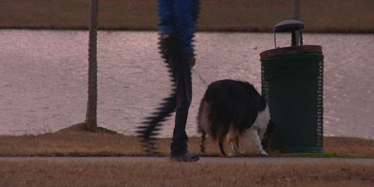 Rain puddles may pose health threat to your furry family members