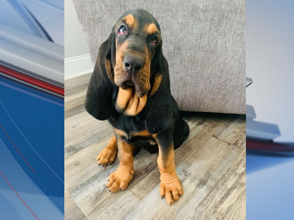 Horry County police welcome newest, furriest member to its team