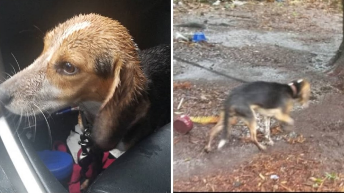 Florence man rescues beagle tied to tree during Hurricane Dorian