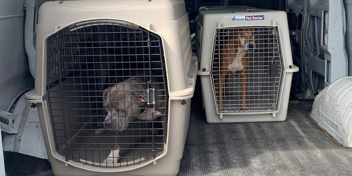 Shelter animals from Louisiana evacuated from Hurricane Delta arrive in Lowcountry