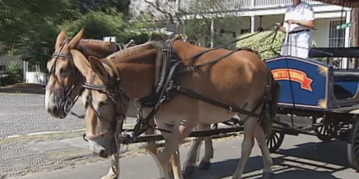 Horse-drawn carriages coming to downtown Conway