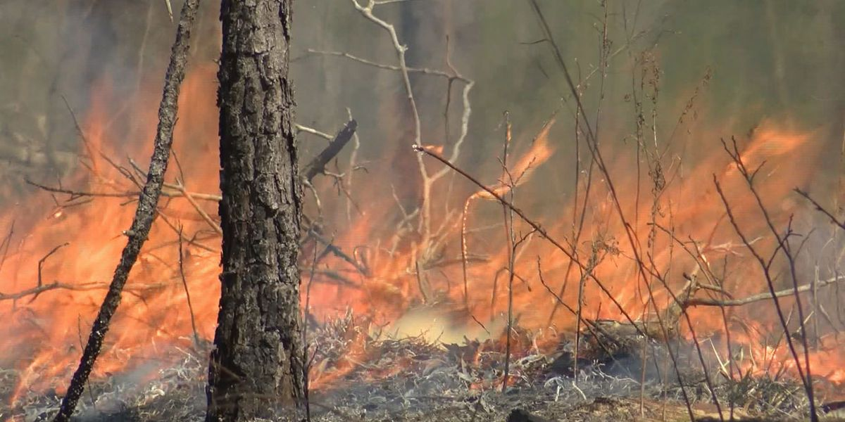Forestry officials warn of extreme fire danger from extended drought for parts of SC