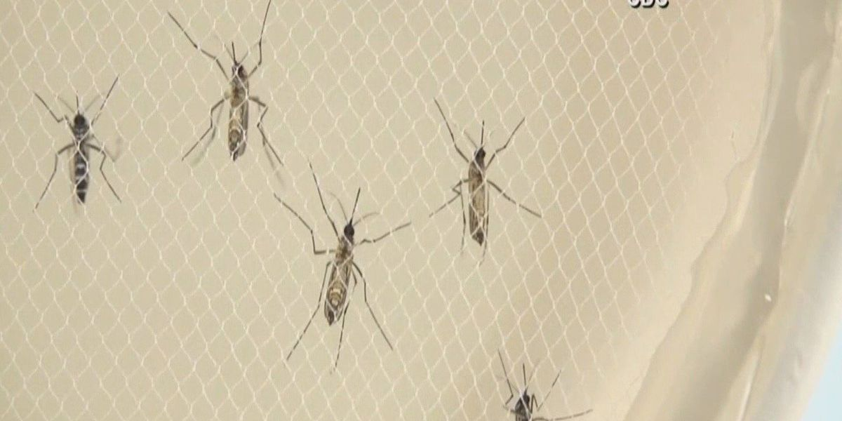 Two weeks until spring, DHEC advises public to take precautions against Zika