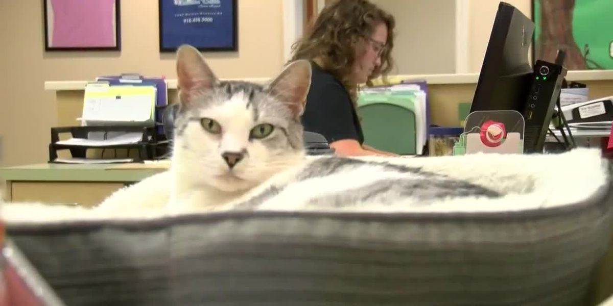 Local vet warns of rise in tick-borne diseases, heartworm in pets