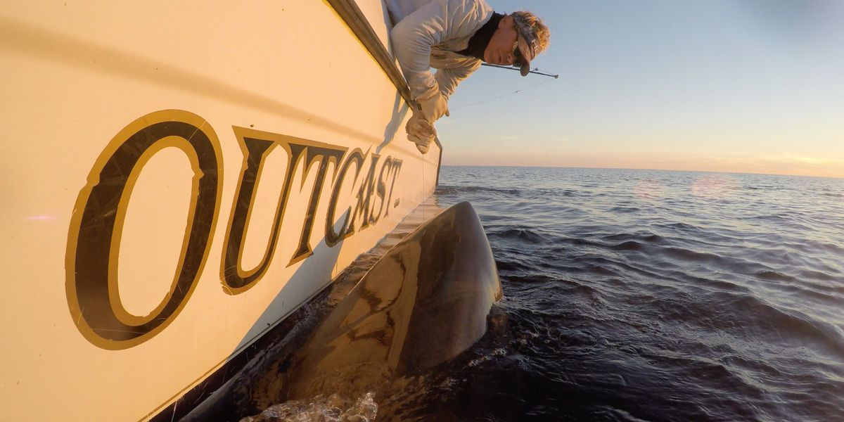 Record-breaking great white shark tagged off coast of South Carolina