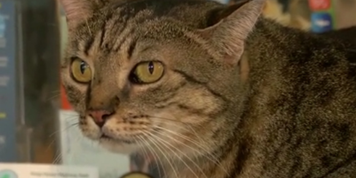 Fitness center offers incentive for person who adopts 'diet buddy' cat