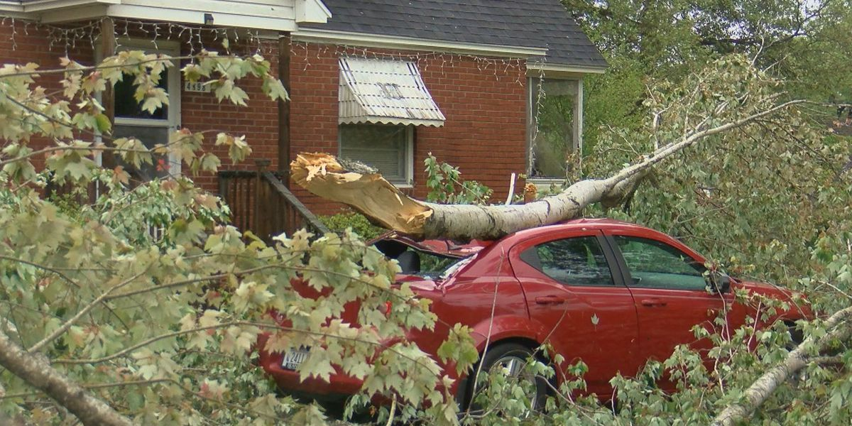 Georgetown County woman happy to be alive after tree falls on car