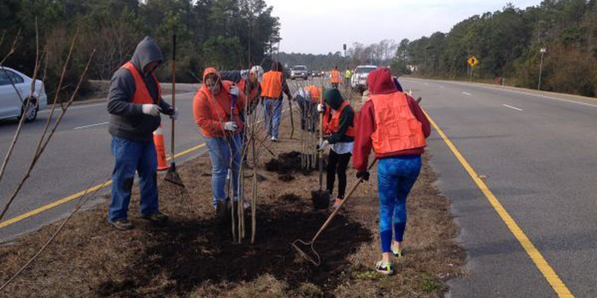 Carolina Forest Civic Association plants Crape Myrtle trees