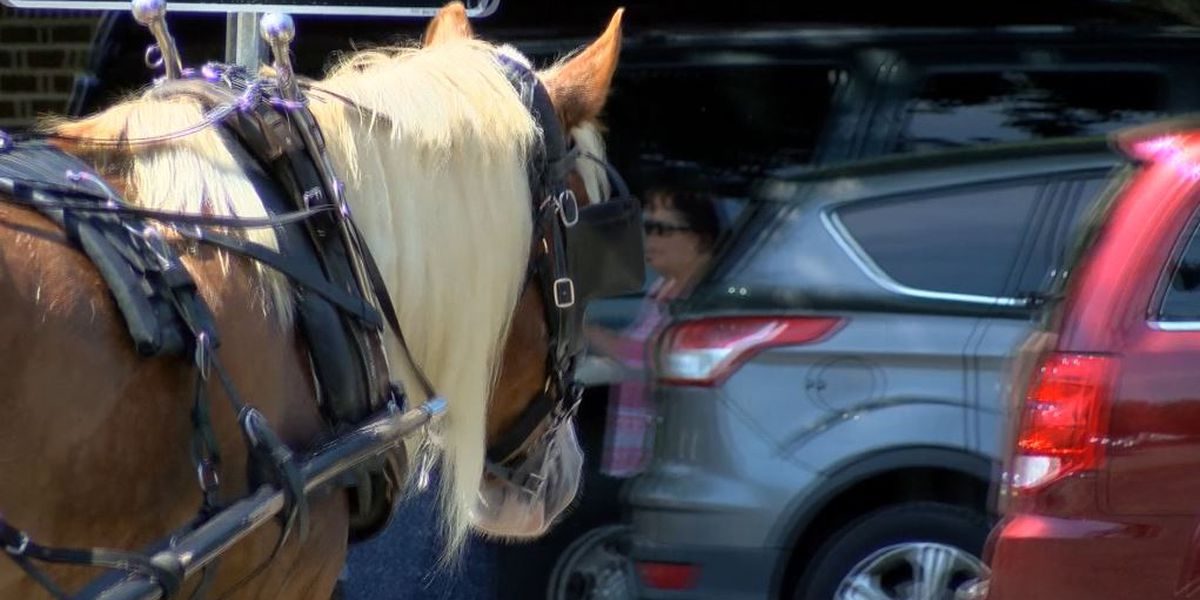 City orders carriage horses off streets because of heat for 4th day in a row