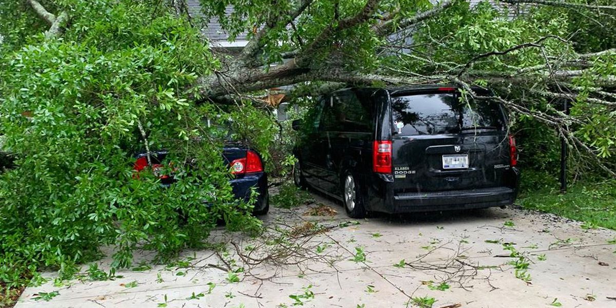 Massive tree branch crushes two vehicles in Socastee area