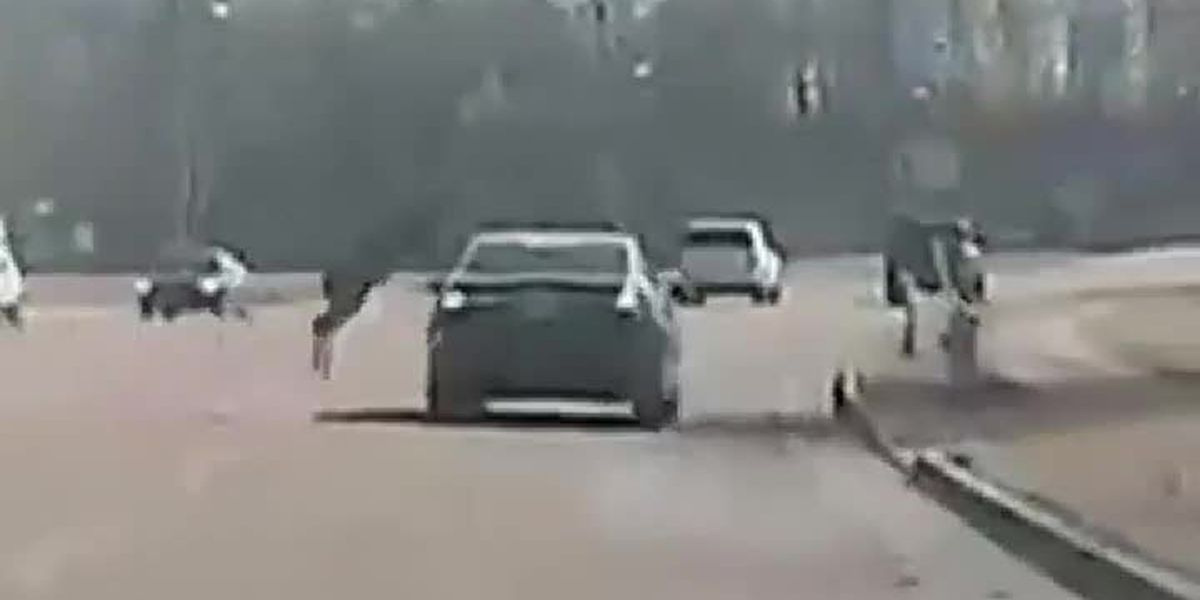WATCH: Dash camera captures deer jumping over moving vehicle on Tennessee road