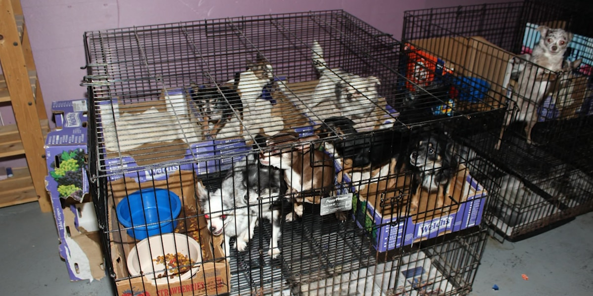 More than 100 animals rescued from alleged puppy mill in New Jersey