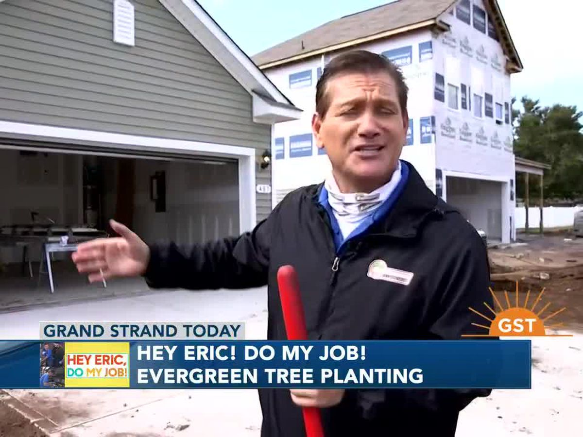 Hey Eric Do My Job! Palm tree planting