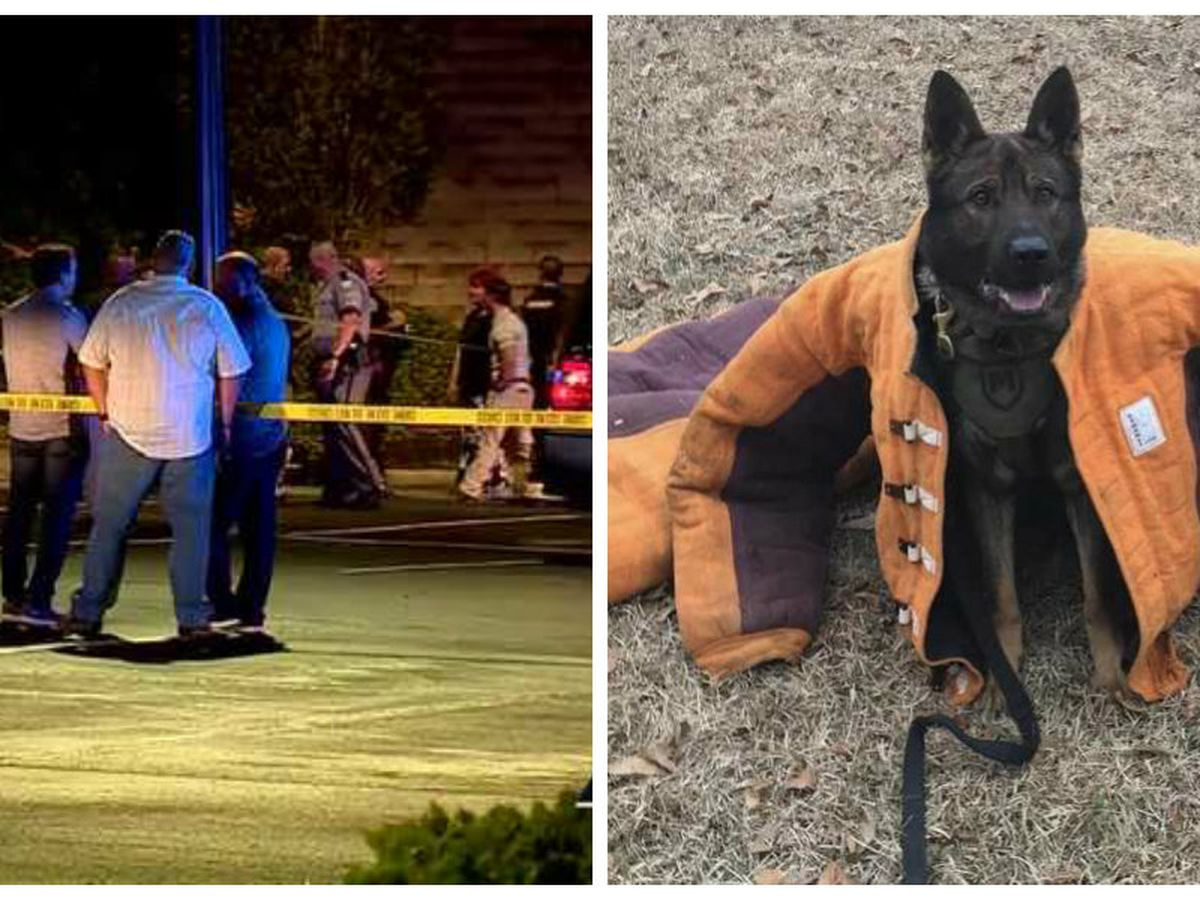 Deputies: K-9 dies after 'ambush' shooting in Anderson; suspect also dead