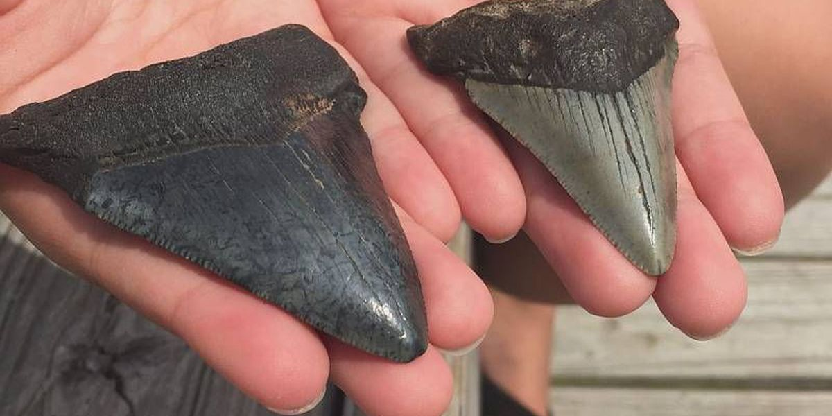 Girl who found Megalodon teeth on Myrtle Beach vacation in June, finds more in December