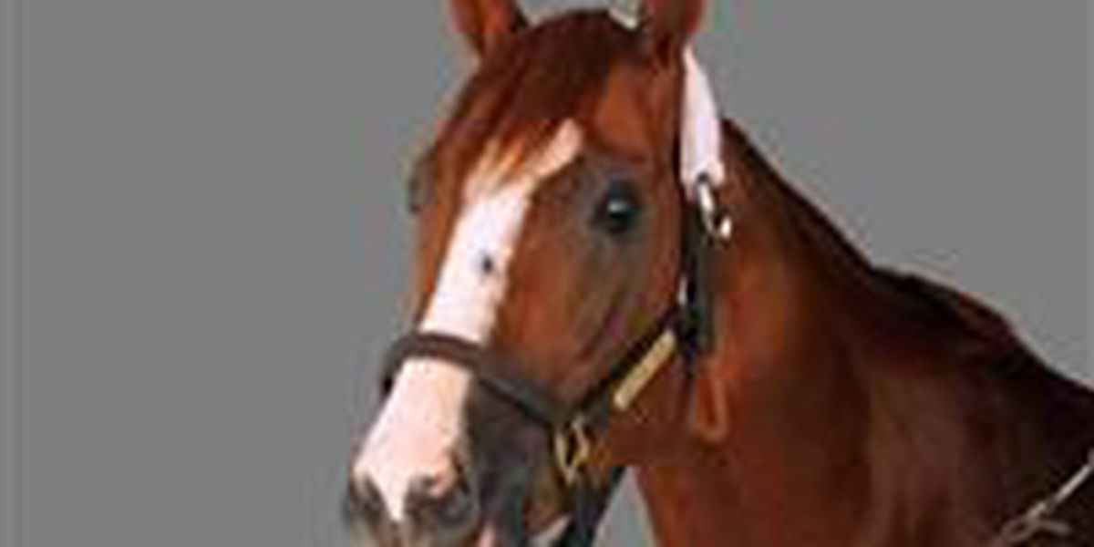Veterinarians urge vaccinations after Dillon Co. horse found with EEE