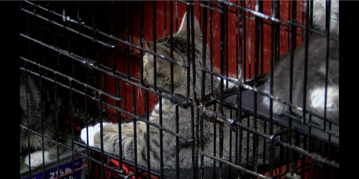 Marion County employee fired after 14 cats taken from shelter found dead